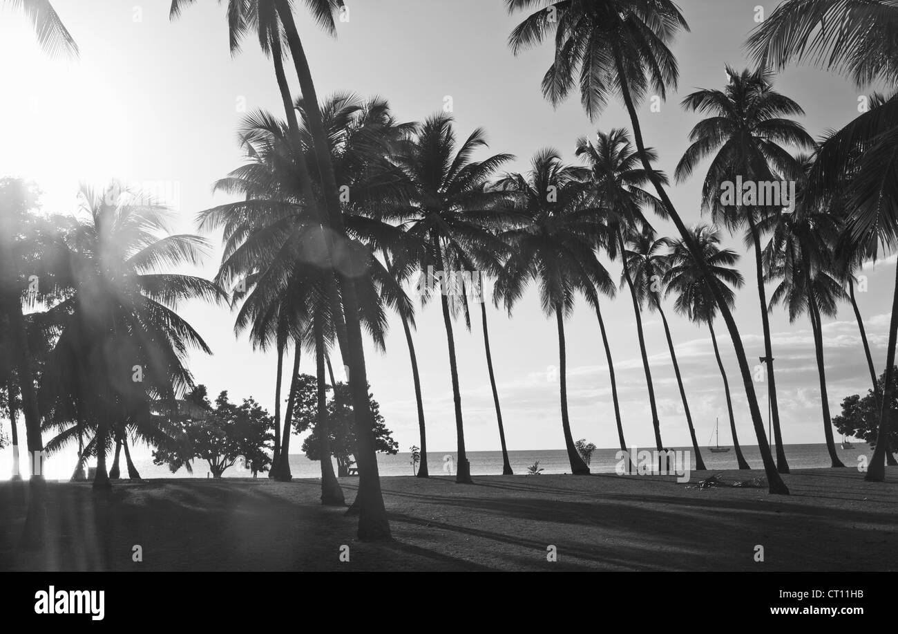 Palm alberi che crescono sulla spiaggia Immagini Stock