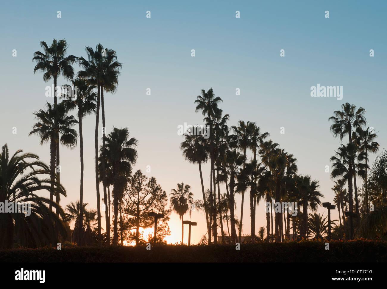 Silhouette di palme al tramonto Immagini Stock