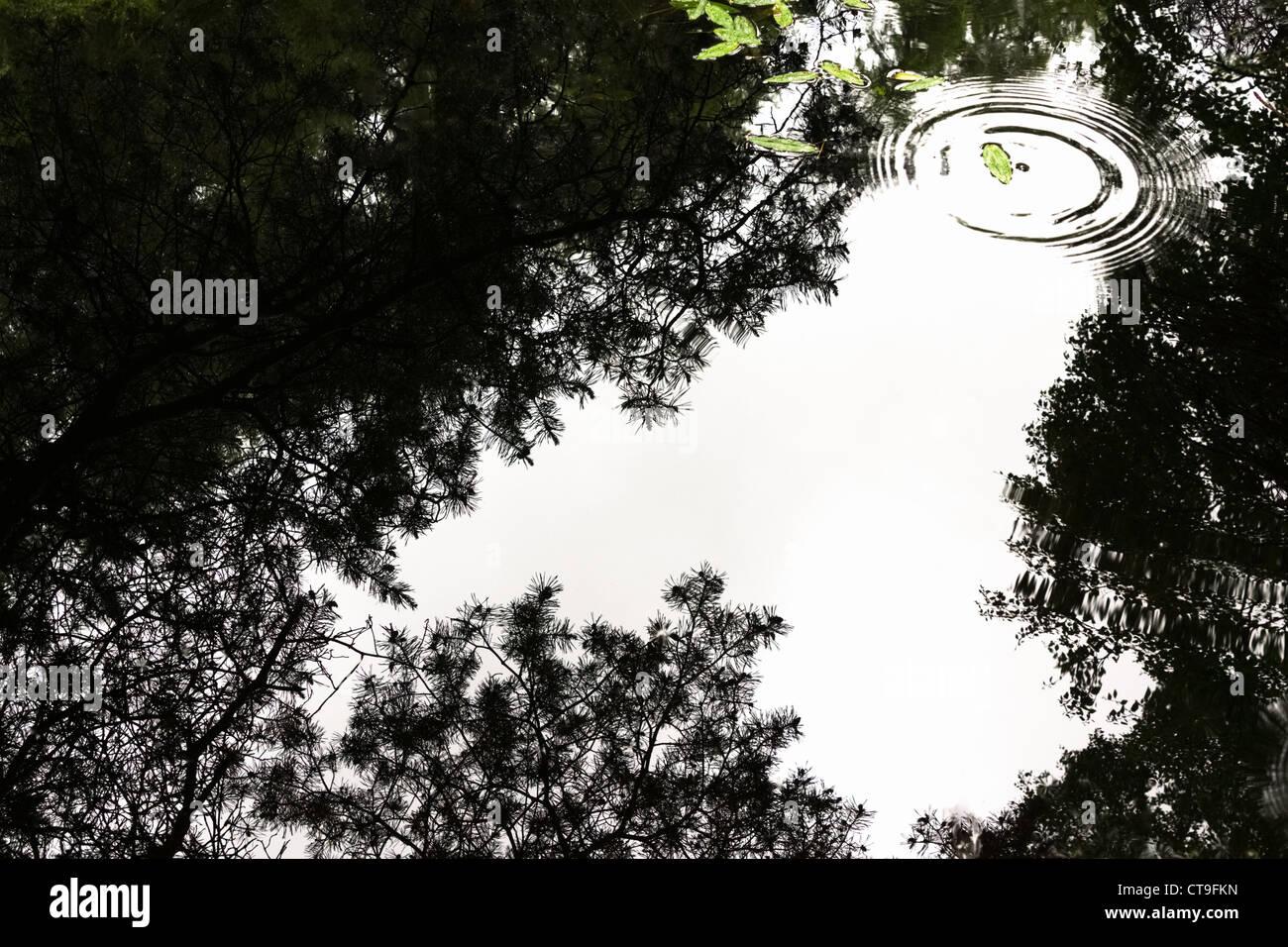 Ripples dalla goccia di pioggia colpendo l'acqua disturbare un perfetto riflesso su uno stagno sulle banche Immagini Stock