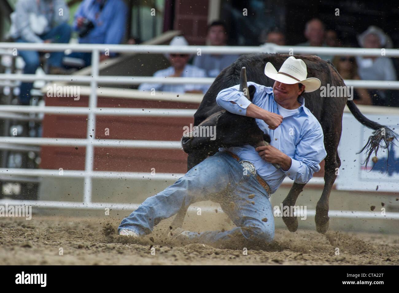 Sterzare il lottatore a Calgary Stampede Rodeo Immagini Stock