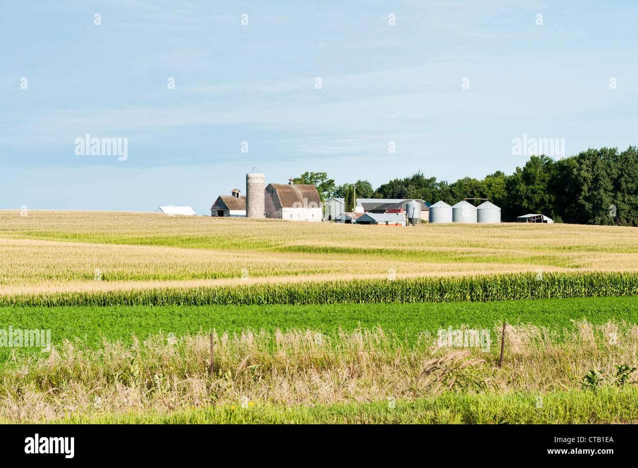 Edifici agricoli sono mostrati con un campo di grano in primo piano. Immagini Stock