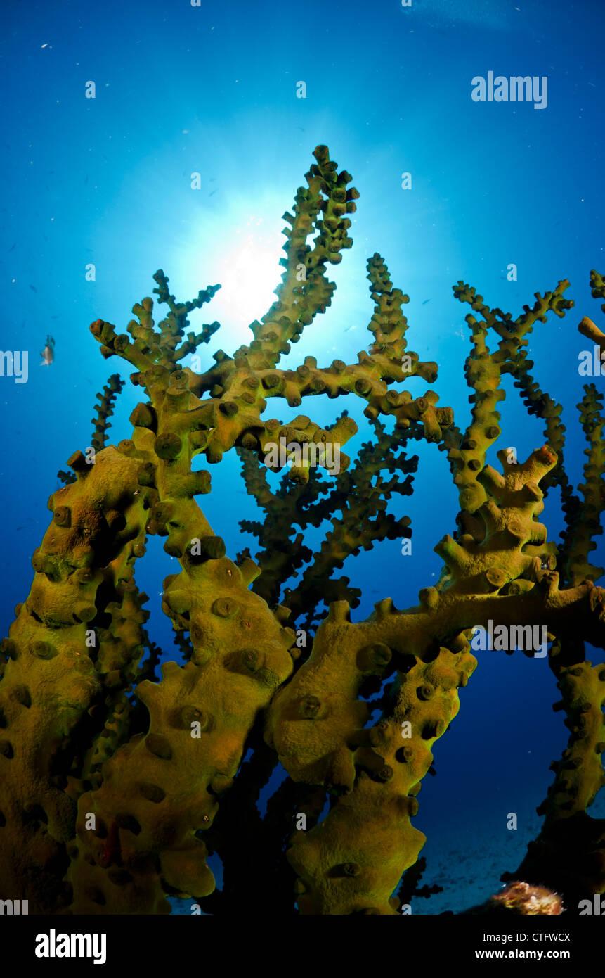 Coral reef scena, parco nazionale di Komodo, Indonesia Immagini Stock