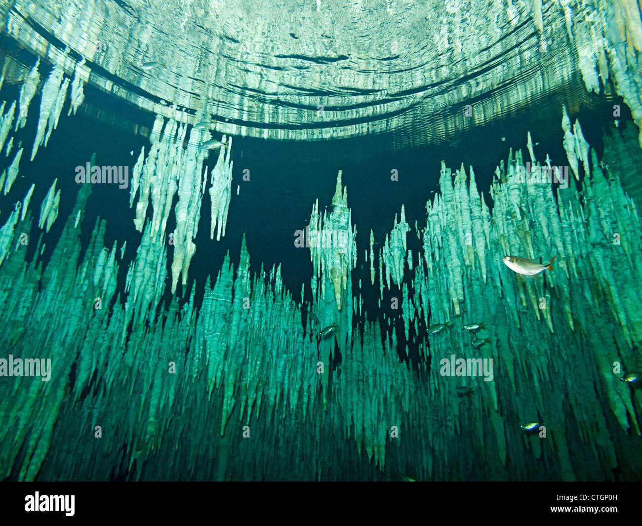 I picchi di stalattiti pendere dal soffitto in sogno Gate, uno dei molti cenotes dove la gente può scuba dive Immagini Stock