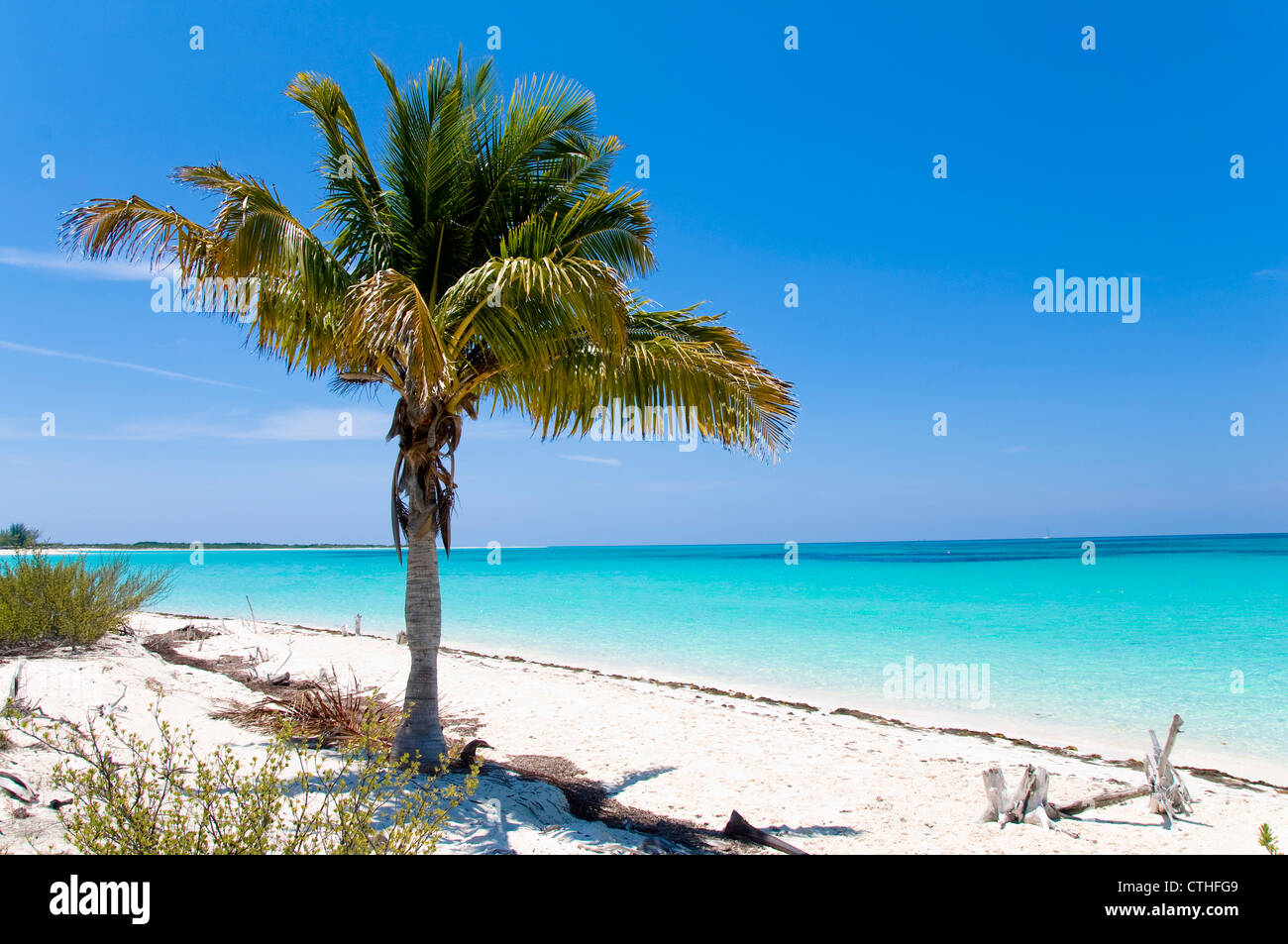 Palm Tree, Sirena Beach, Cayo Largo del Sur, Cuba Immagini Stock