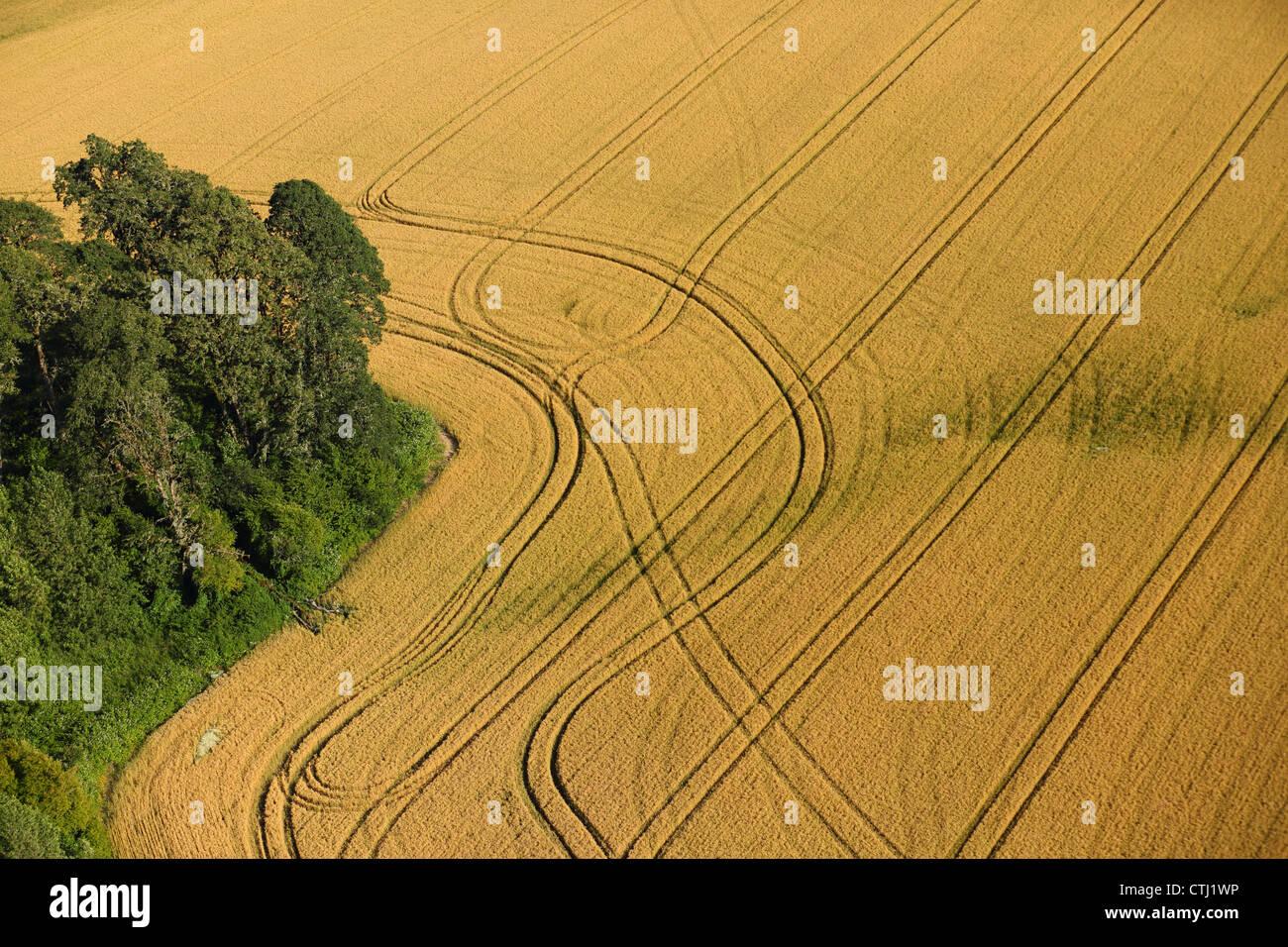 Vista aerea del campo di grano con modelli Immagini Stock