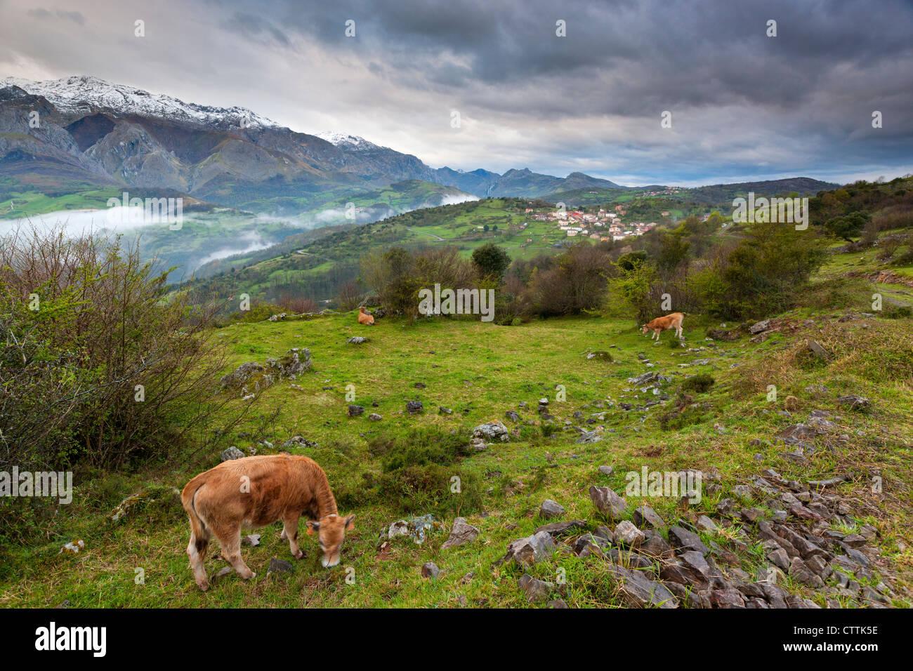 Una vista sul Parco Nazionale Picos de Europa dal nord, vicino a Mirador Pedro Udaondo, Asturias Immagini Stock
