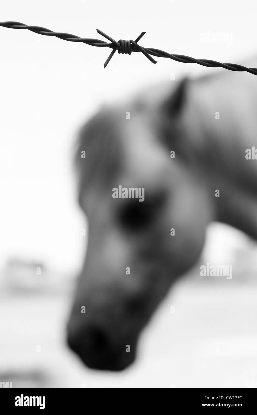 Francia, 2012. Cavallo Immagini Stock