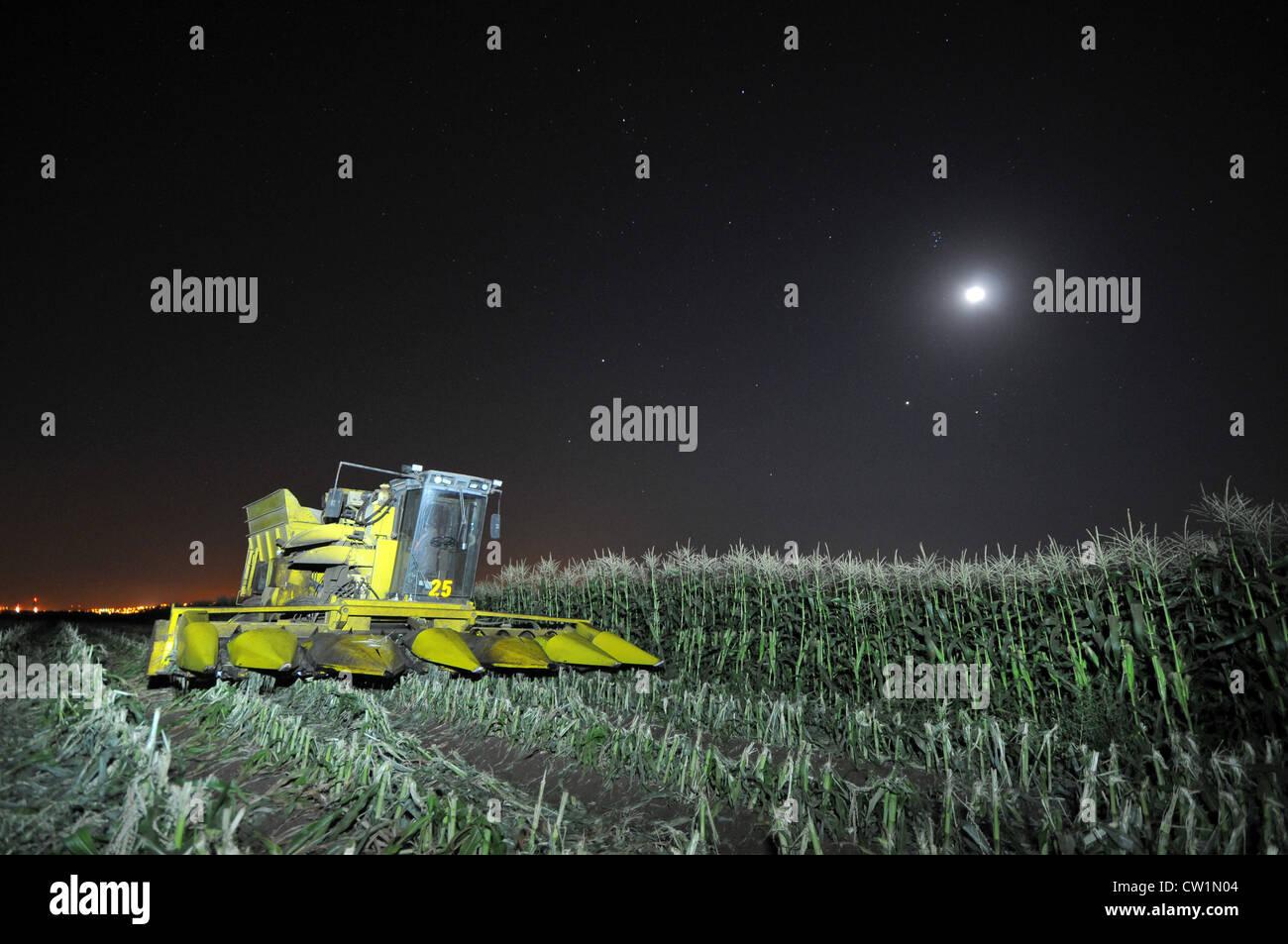Mietitrebbia in un campo di mais di notte, vicino Kibbutz Mevo Hama nel Golan, foto di Shay prelievo Foto Stock