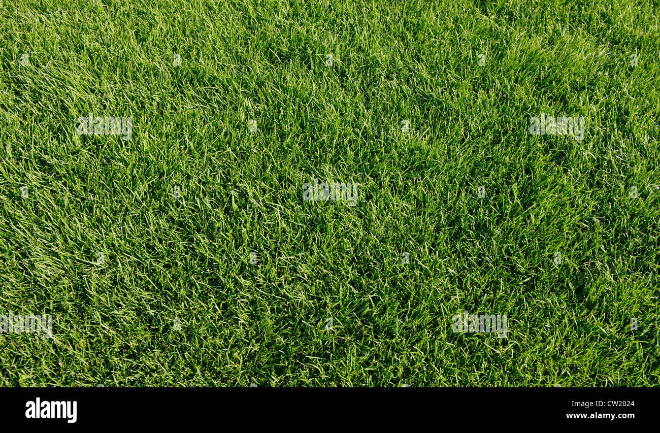 La molla nuova erba verde per la progettazione Immagini Stock
