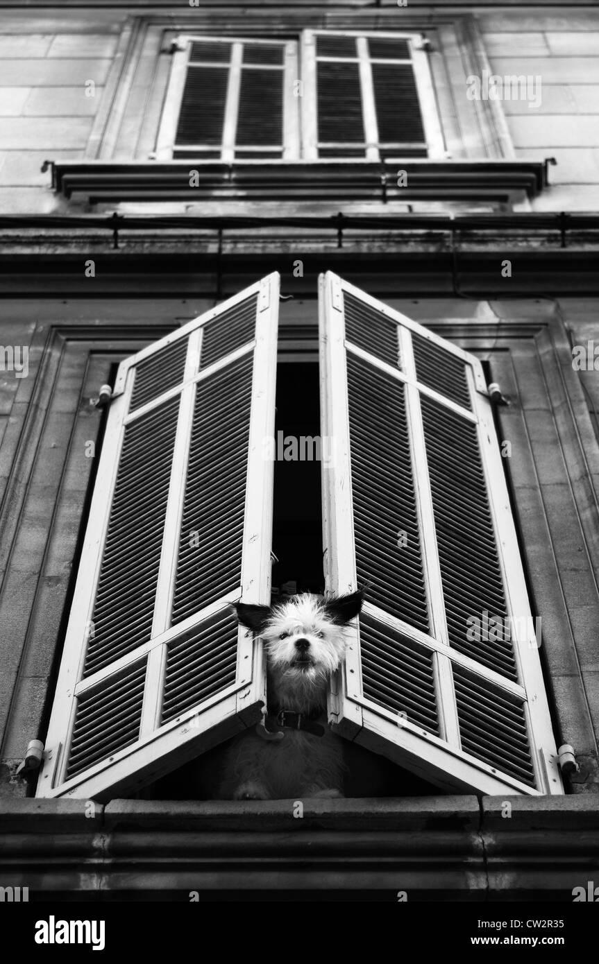 Cane alla finestra Immagini Stock