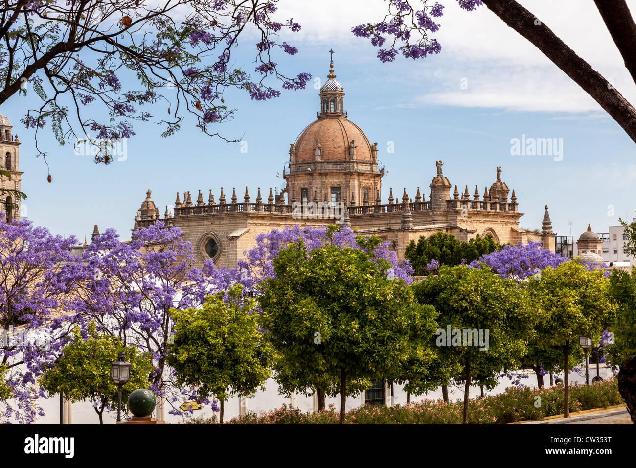 Jerez de la Frontera, Andalusia, Spagna, Europa. vista della cattedrale attraverso gli alberi di jacaranda. Foto Stock