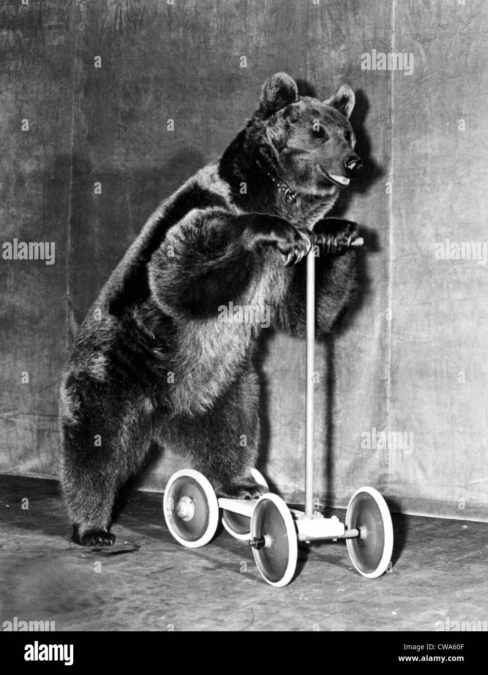 Circus recare dal 1942.. La cortesia: CSU Archivi / Everett Collection Immagini Stock