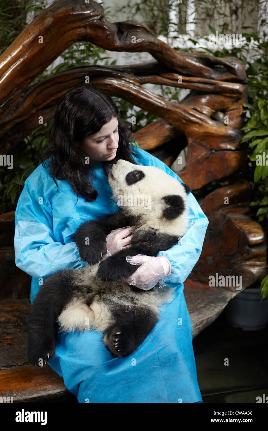 Donna che mantiene 6 mese vecchio Panda Gigante a Chengdu Panda allevamento Centro di Ricerca Immagini Stock