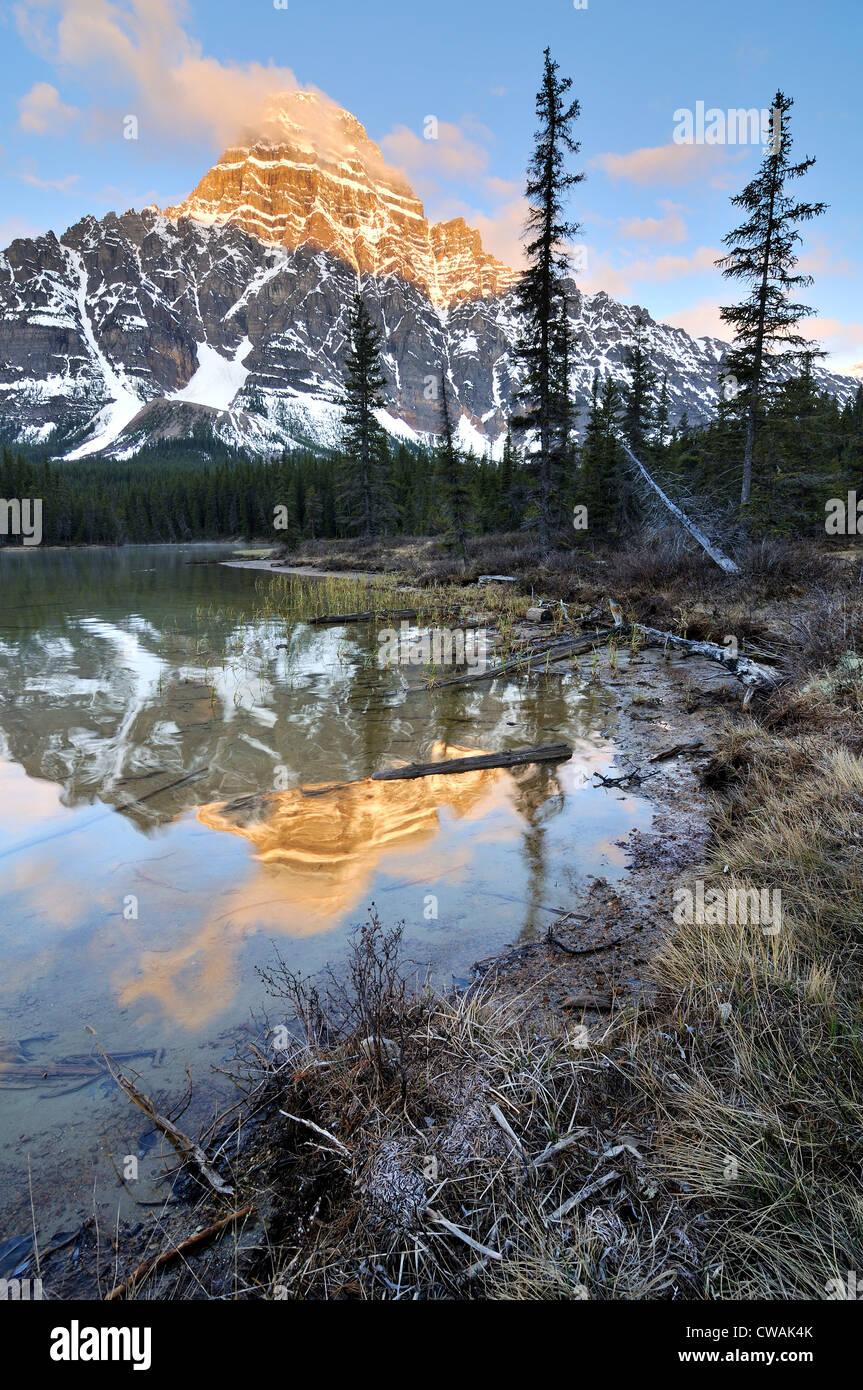Abbassare gli uccelli acquatici Lago e Monte Chephren, il Parco Nazionale di Banff, Alberta, Canada Foto Stock