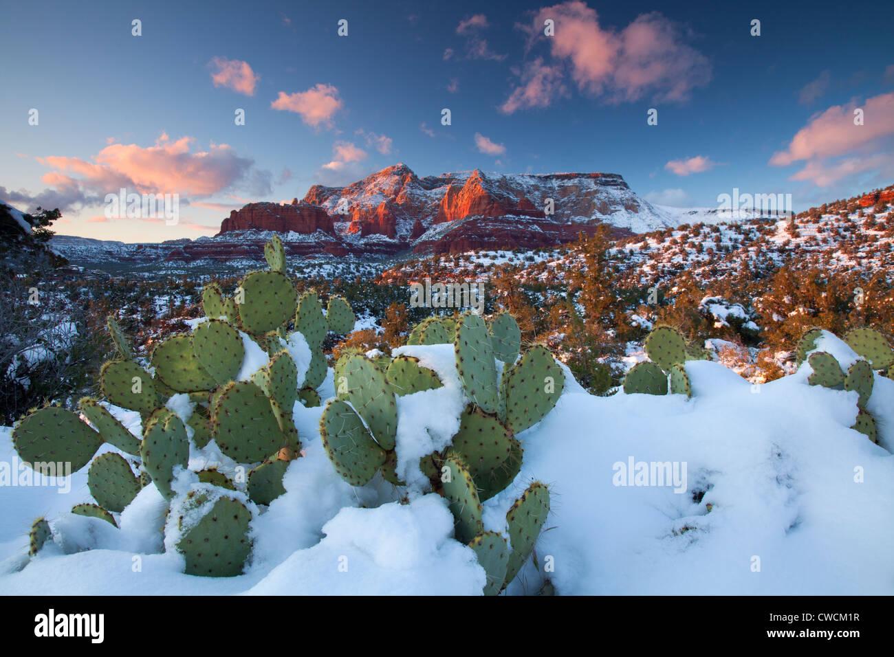 In inverno la neve sulla collina Schnebly, Coconino National Forest, Sedona, in Arizona. Immagini Stock
