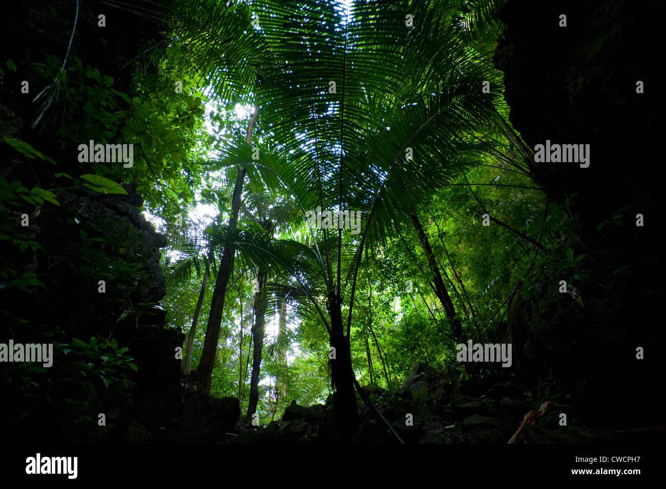 La foresta pluviale tropicale nella provincia di Krabi tra pietre calcaree carsiche, Ton Sai, Provincia di Krabi, Immagini Stock