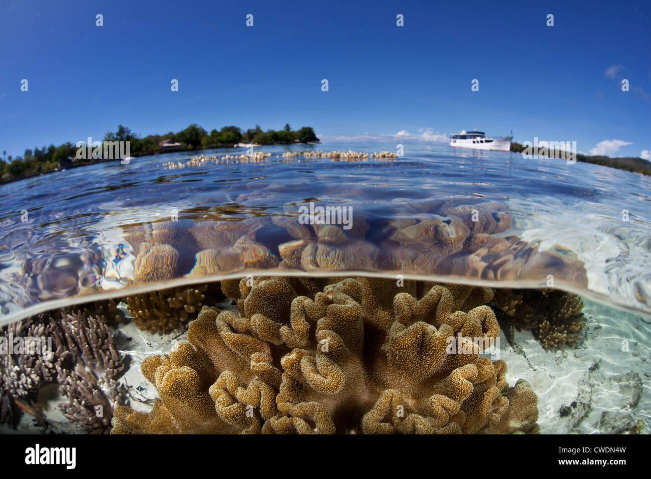 Una nave da crociere ha ancorato vicino a una bassa barriera corallina dove in morbida pelle con coralli, Sarcophyton Immagini Stock