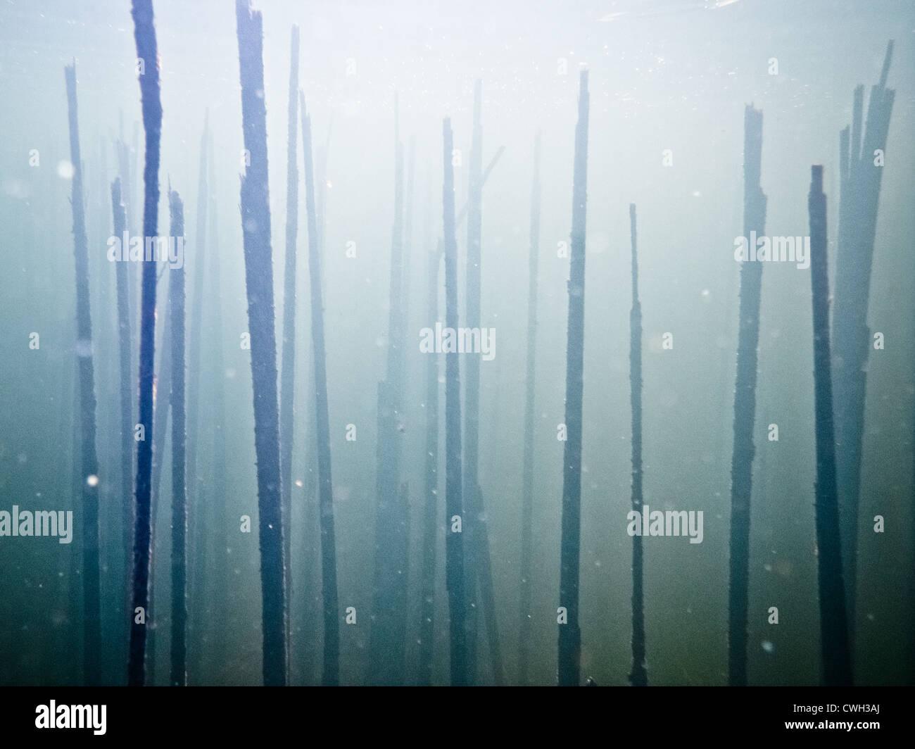 Sott'acqua,mondo subacqueo,abstract,misterioso Foto Stock