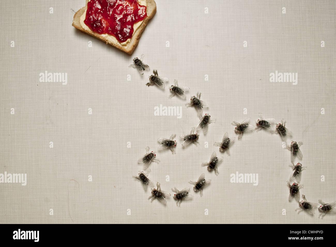 Fly,toast,poco invitante Immagini Stock