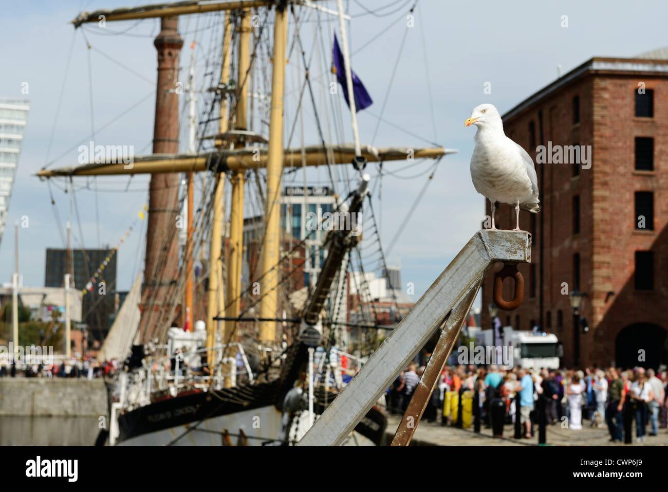 Un gabbiano al mare irlandese Tall Ships Regatta in Liverpool 2012 Immagini Stock
