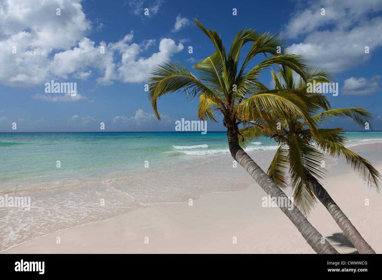 Alberi di palma che cresce su spiaggia tropicale Immagini Stock