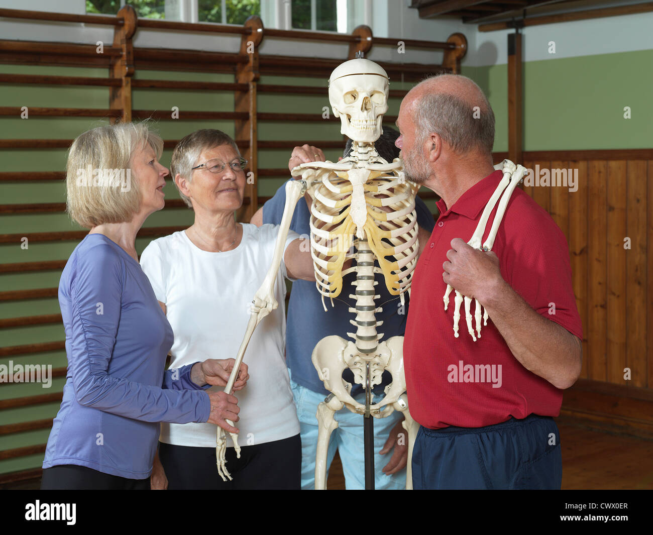 Le persone anziane esaminando lo scheletro Foto Stock