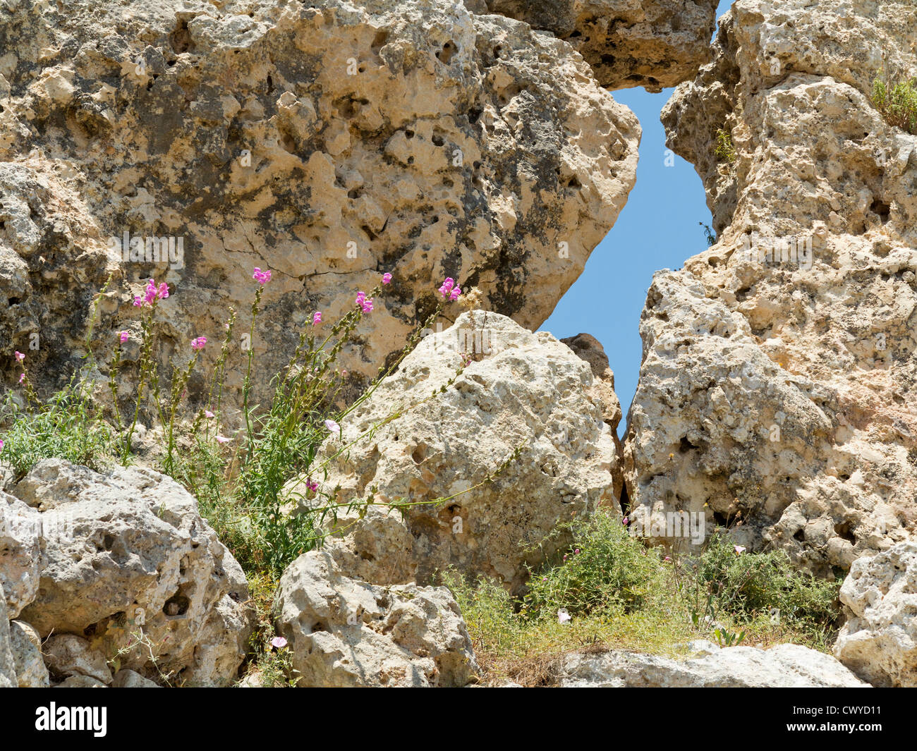 Wild fiori di primavera presso i templi di Ggantija vicino Xagha, isola di Gozo, vicino a Malta, Mare Mediterraneo Immagini Stock