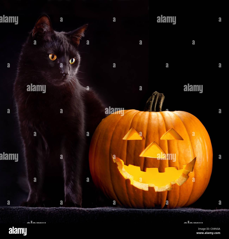 Zucca Halloween Gatto.Zucca Di Halloween E Gatto Nero Scary Spooky E Creepy Orrore Di