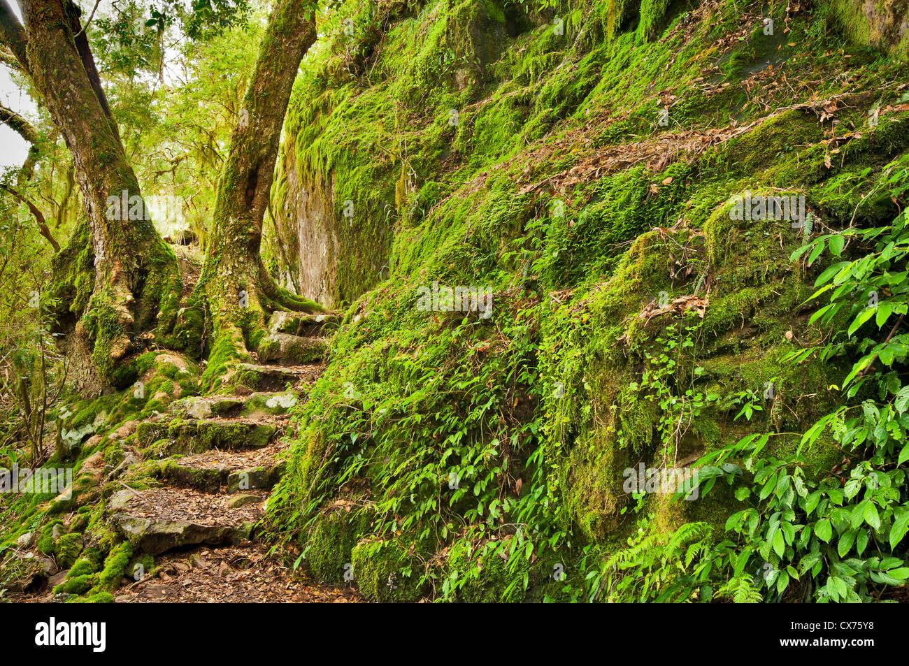 Fasi di roccia in un antico bosco di faggio. Immagini Stock