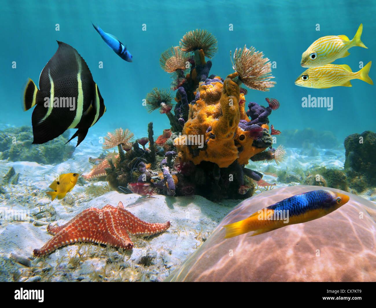 Floor Starfish Underwater Immagini Floor Starfish Underwater Fotos