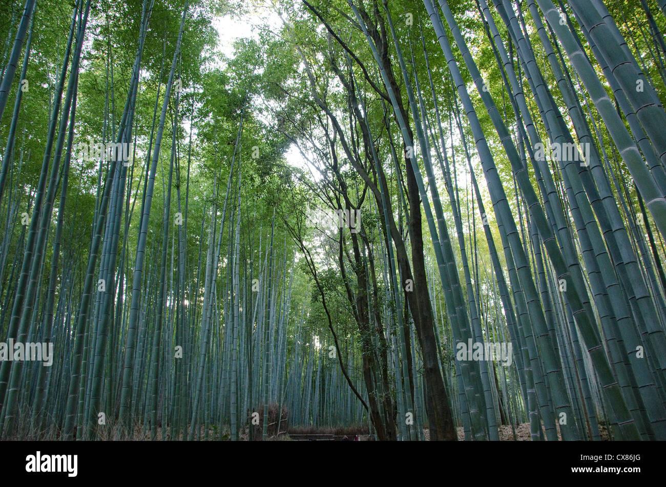 Verde foresta di bamboo visto dal lato a arashiyama, Giappone Immagini Stock