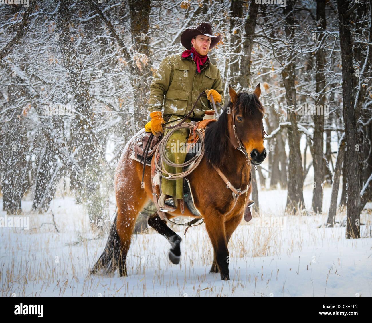 Cowboy a cavallo in un ranch nel nord-est del Wyoming Immagini Stock