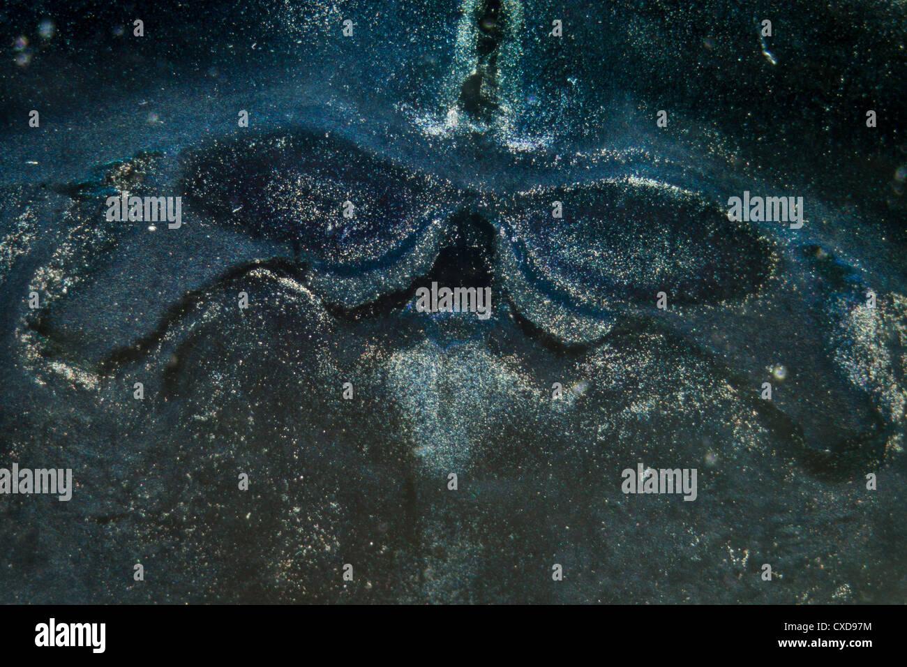 Microscopia di cervello di ratto neuroni ippocampali Immagini Stock