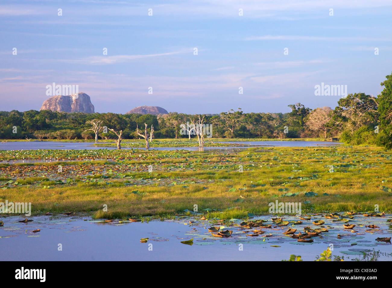Il lago e la vista di Elephant Rock nel tardo pomeriggio, Yala National Park, Sri Lanka, Asia Immagini Stock