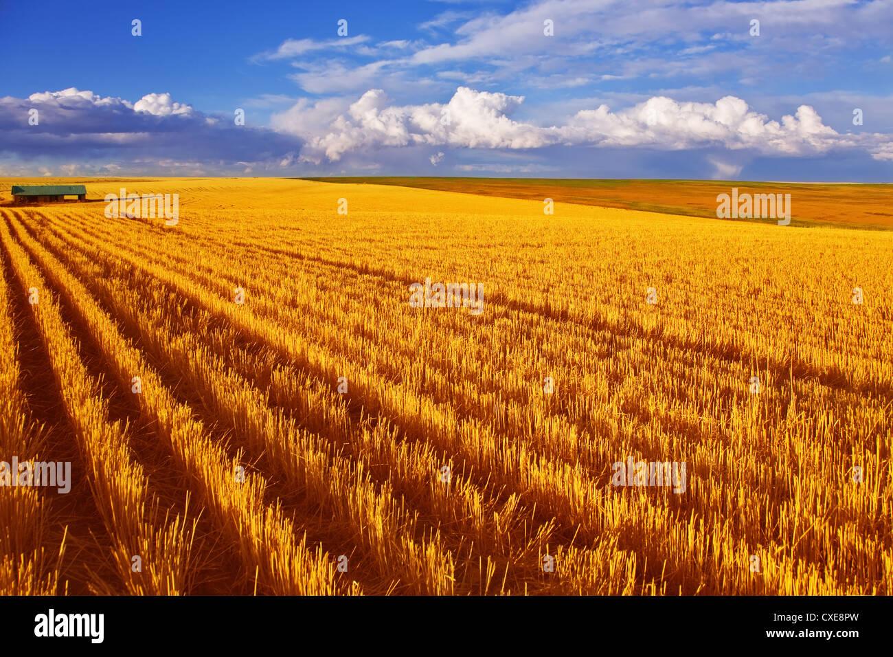 Un enorme campo di stato Montana Immagini Stock