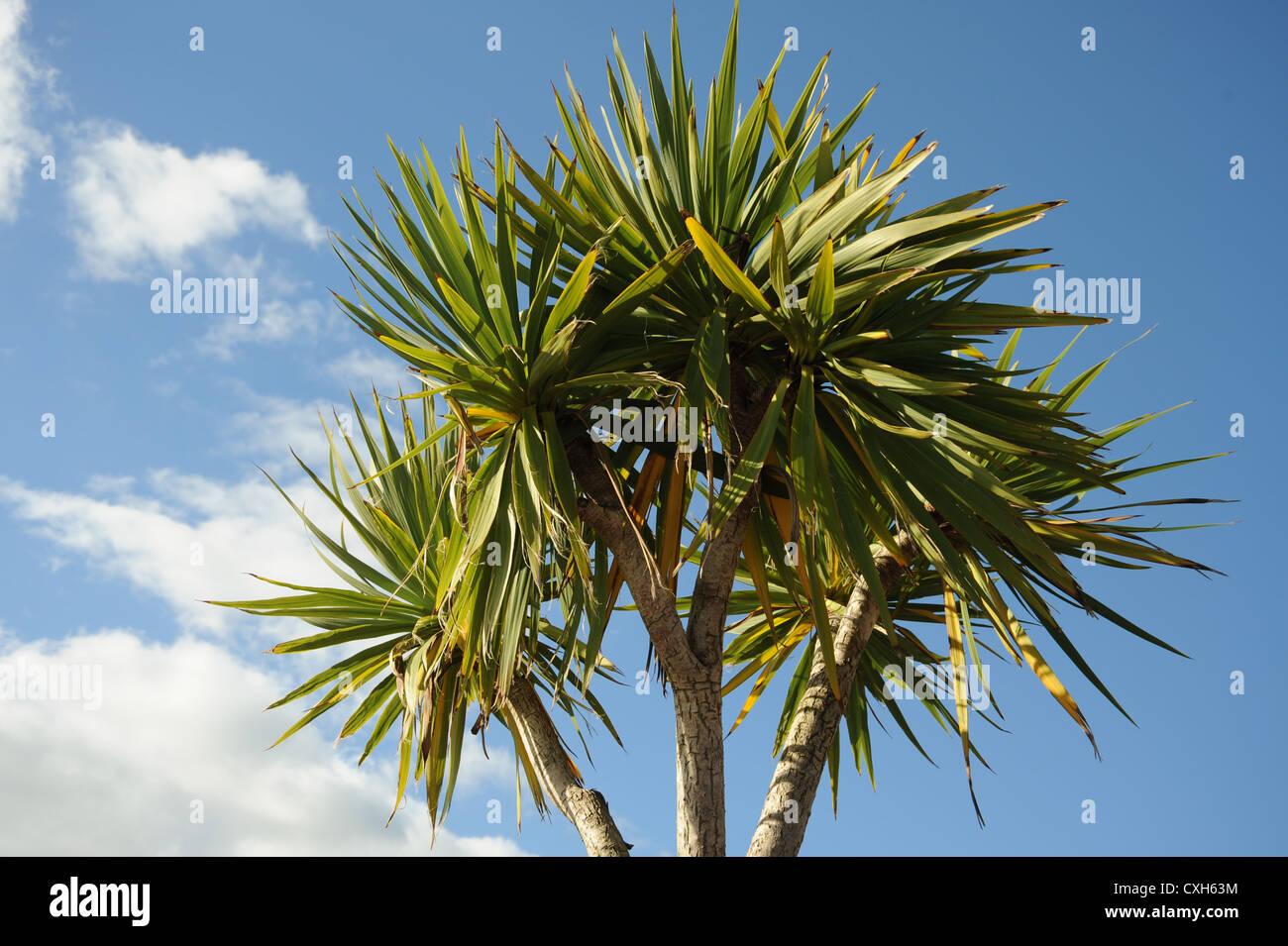 Palm tree contro un cielo blu Immagini Stock