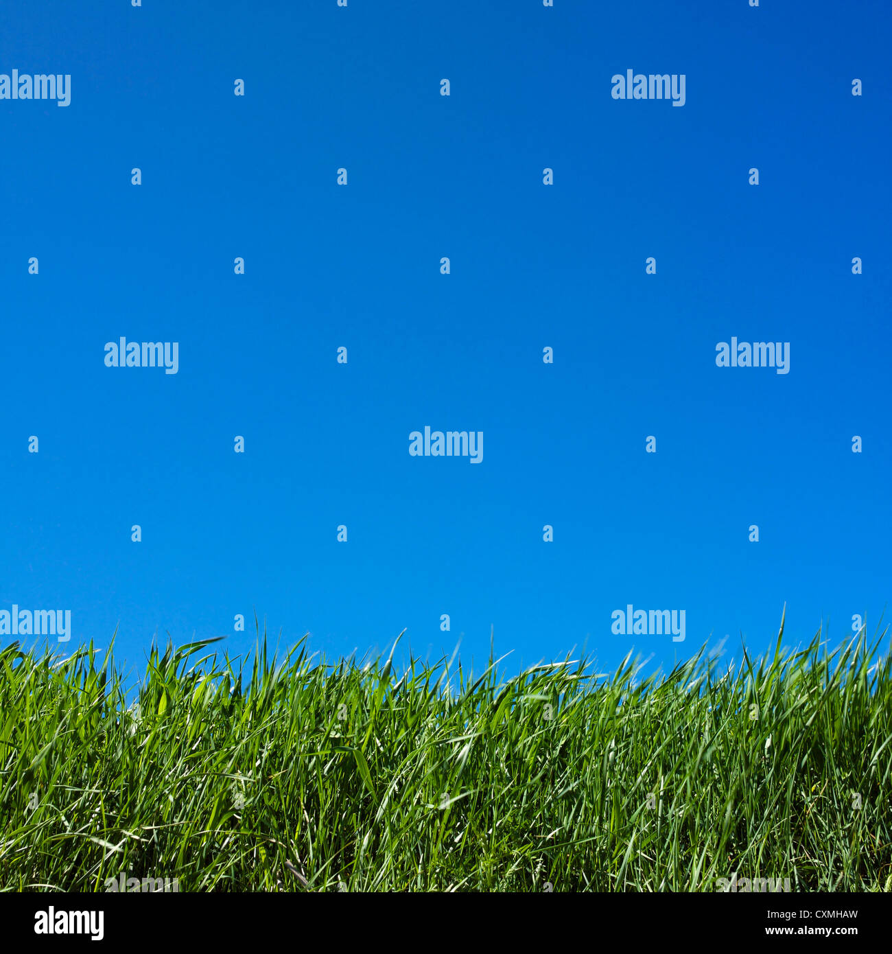 Erba close up e cielo blu sullo sfondo Immagini Stock