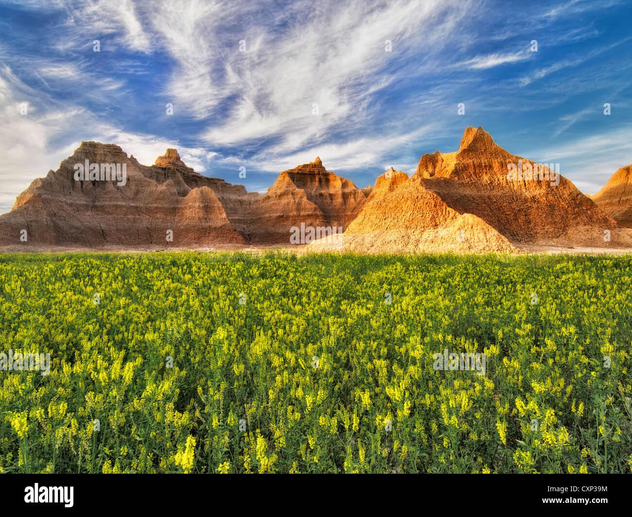 Giallo trifoglio dolce e formazioni rocciose. Parco nazionale Badlands, South Dakota. Immagini Stock