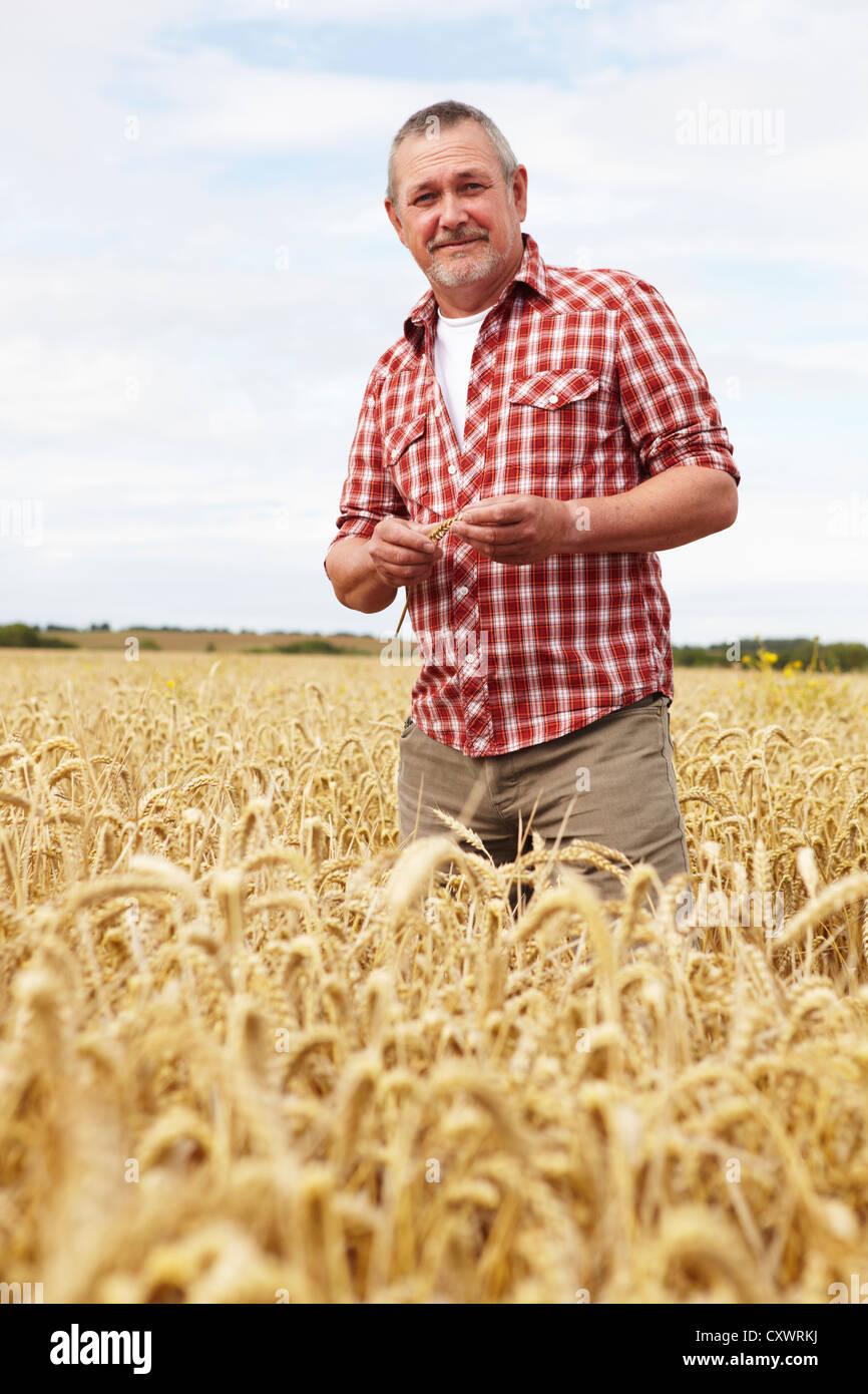 Agricoltore in piedi nella verifica del campo di raccolto Immagini Stock