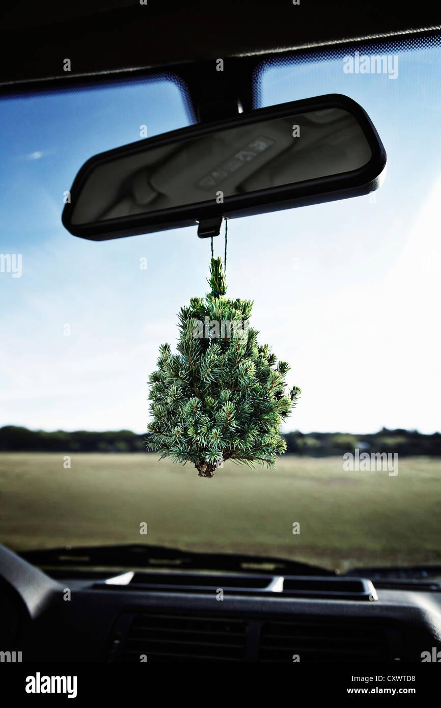 Albero sempreverde su specchietto retrovisore Immagini Stock