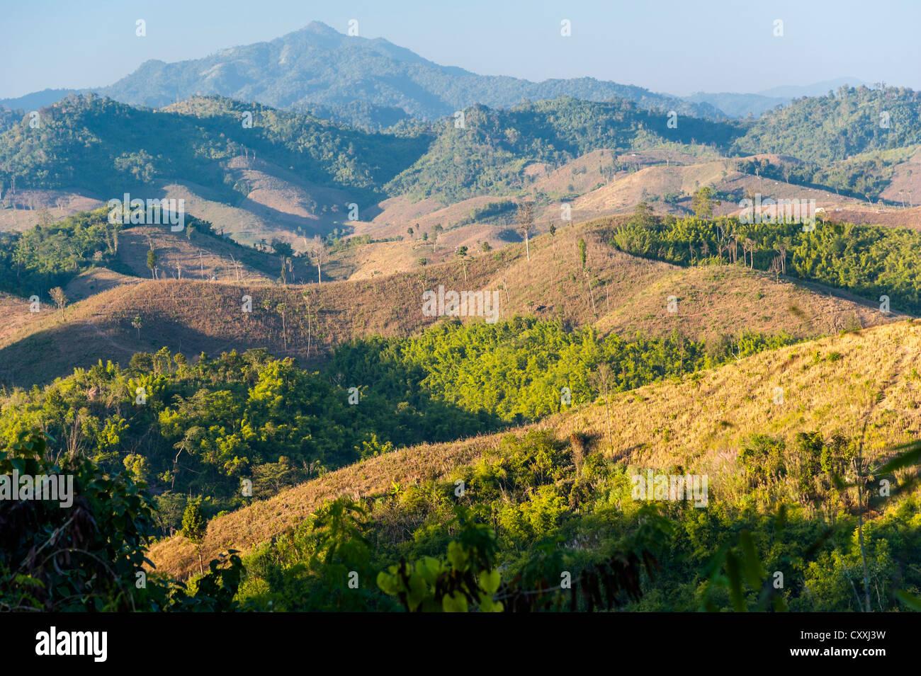 Paesaggio, raccolte di campi di mais, foreste di bambù, Thailandia del Nord della Thailandia, Asia Immagini Stock