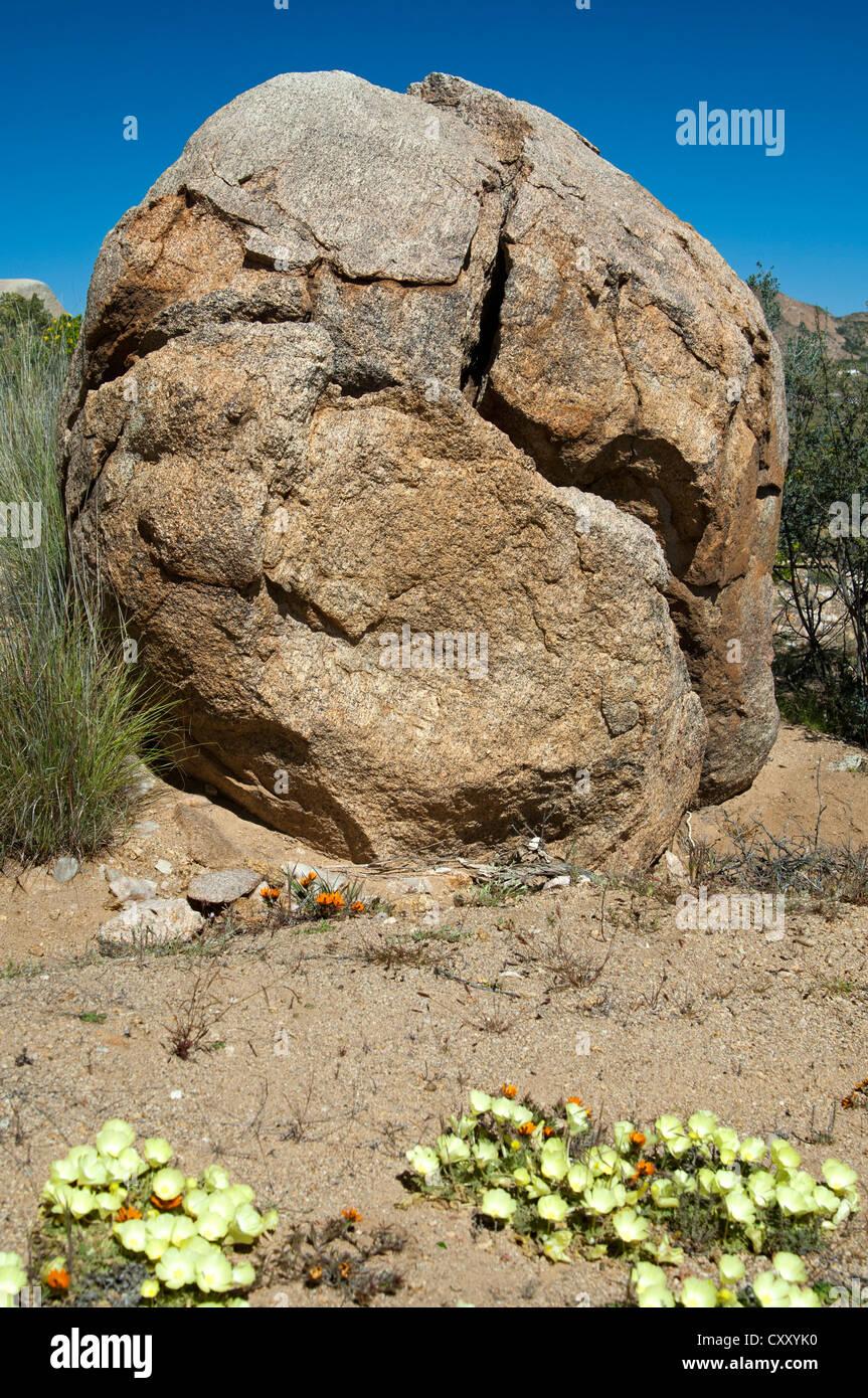 Roccia di granito, diviso da estreme fluttuazioni della temperatura, Namaqualand, Sud Africa e Africa Immagini Stock