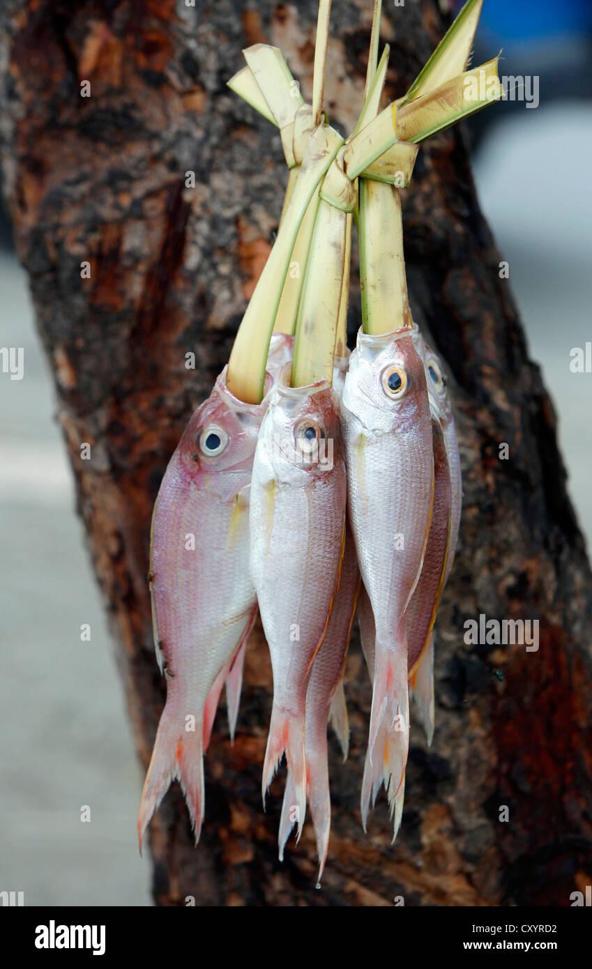 Pesce fresco in vendita appeso su foglie di palmo a un mercato di Fick a Dili, capitale di Timor Orientale Foto Stock