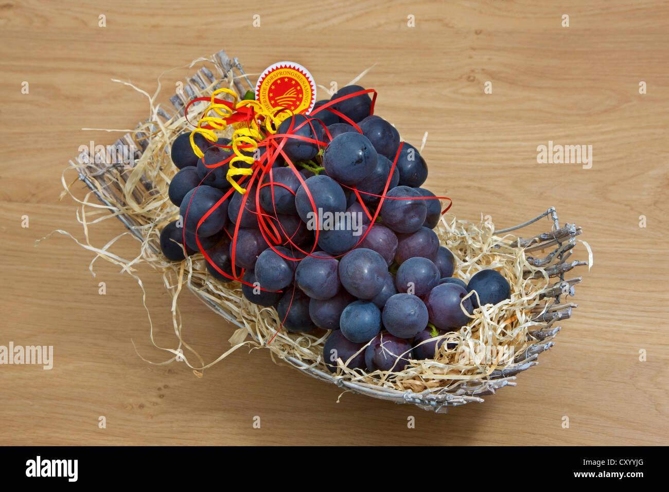 Presentazione del tavolo blu uva (Vitis vinifera) dal Flemish Brabant, Fiandre, in Belgio Immagini Stock