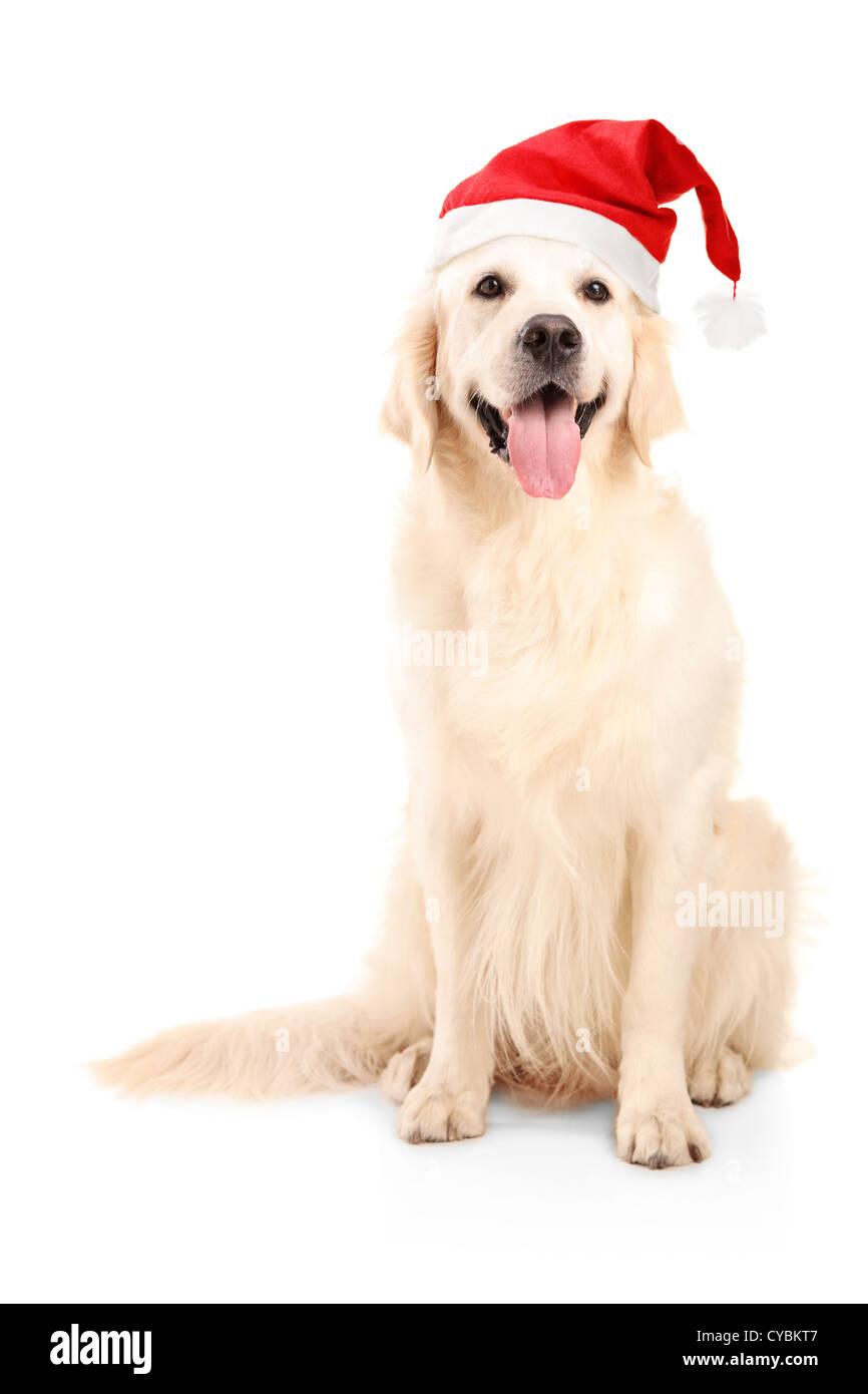 Sfondi natale cani