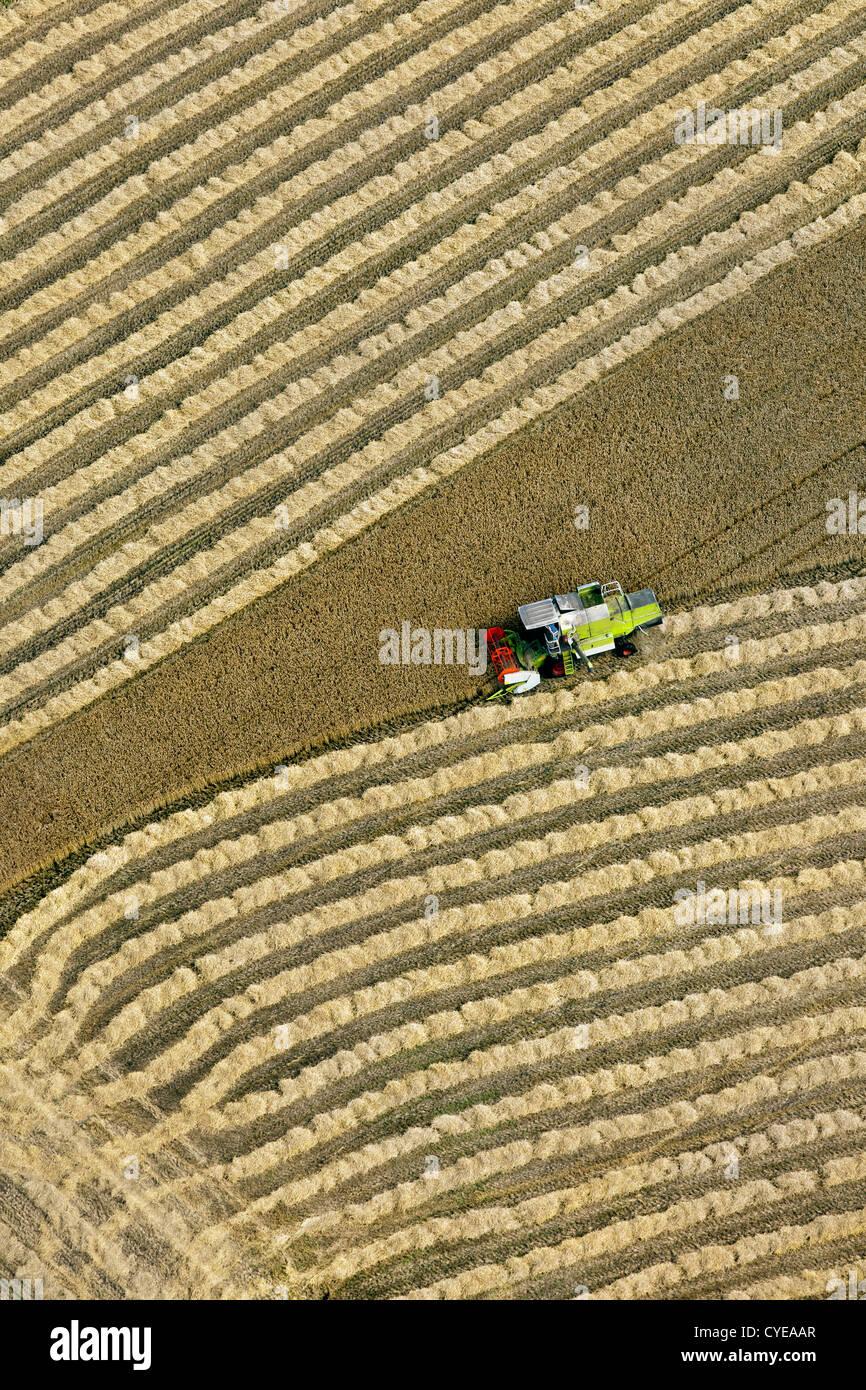 I Paesi Bassi, Donderen, mietitrebbia la mietitura del frumento campo. Antenna. Immagini Stock