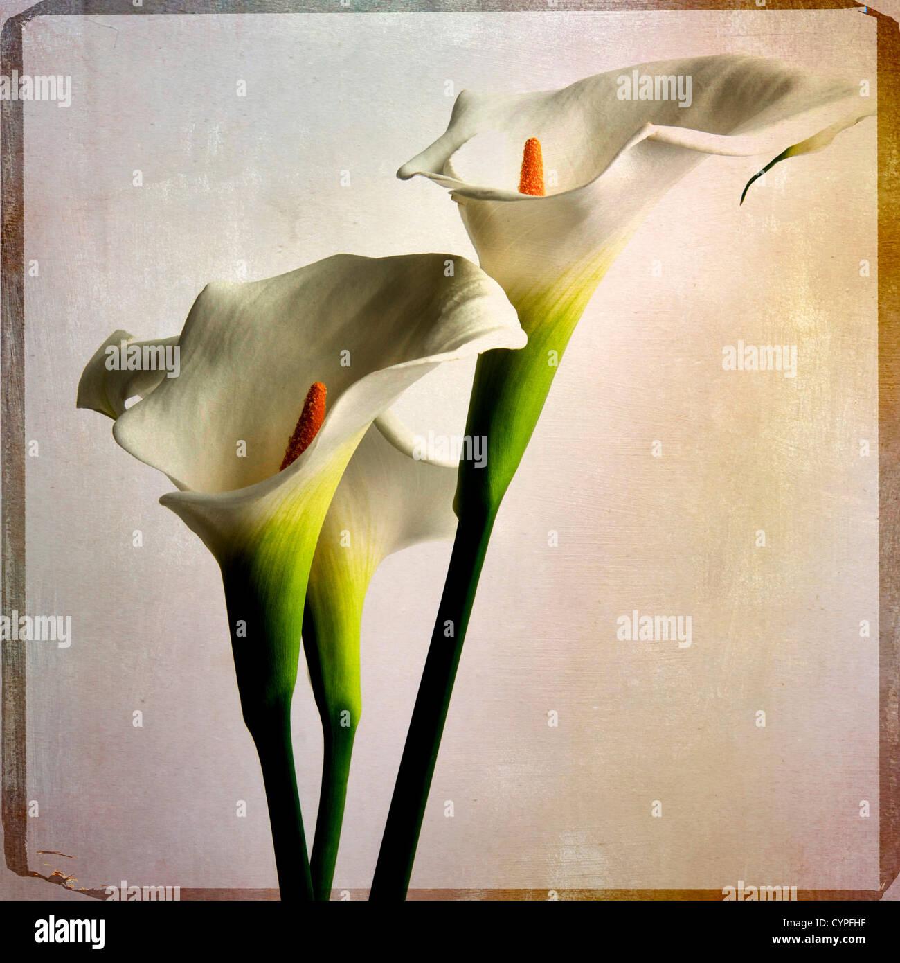 Texture per illustrazione e fotografia da Flypaper texture Immagini Stock