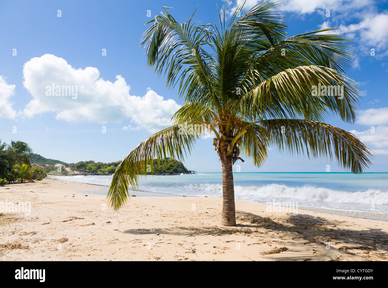 St Martin / Saint Maarten, isola dei Caraibi : promontorio off Friar's Bay con Palm tree Immagini Stock