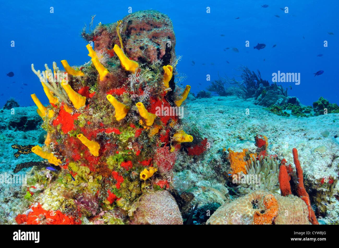 Colorate barriere coralline e spugne, Cozumel, Quintana-Roo, Messico, Mar dei Caraibi Immagini Stock
