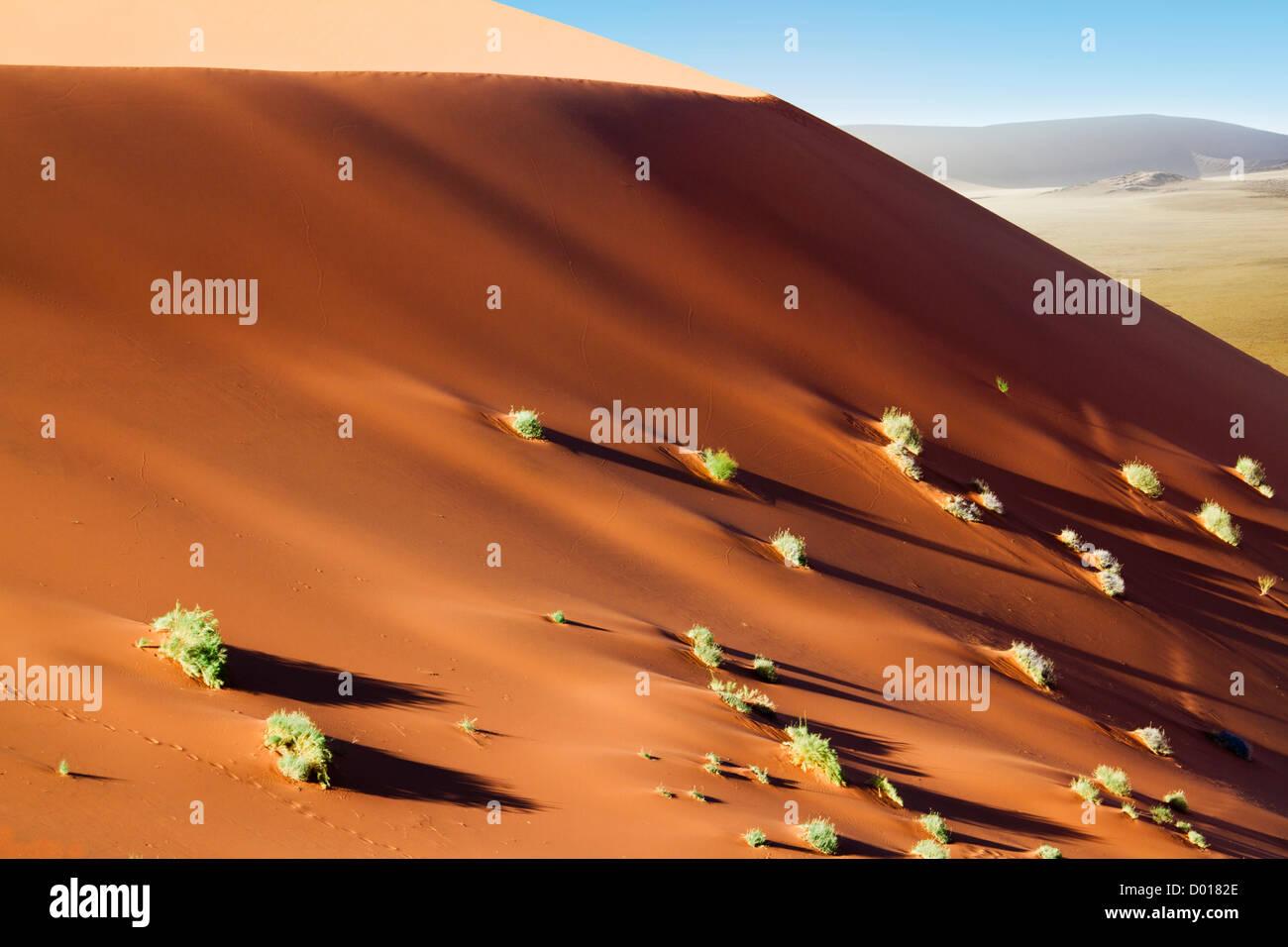 Girovagando dune di Sossuvlei in Namibia Immagini Stock